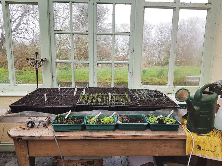 Time to get sowing